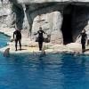 spettacolo dei delfini al parco oltremare di riccione